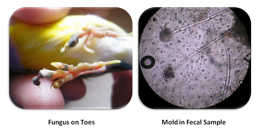 how to take mold infection