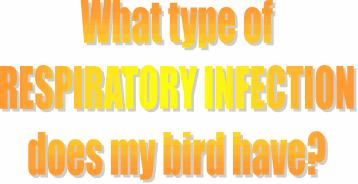 What Type of Respiratory Infection - Laraine McGinnis | Laraine's